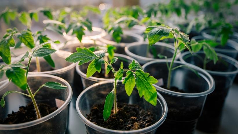 start-up-growing-seed