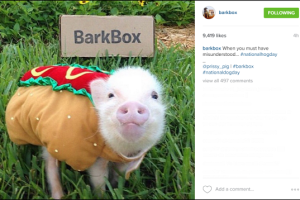 Barkbox-Instagram