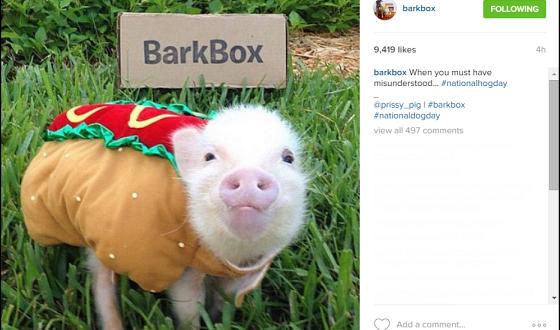 Barkbox-Instagram