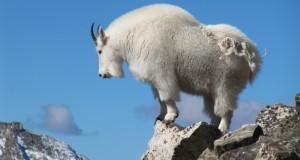 Conquering Colorado's Quandary Peak