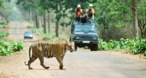 Wildlife Photo Tips for Visitors to the Tadoba Tiger Resort