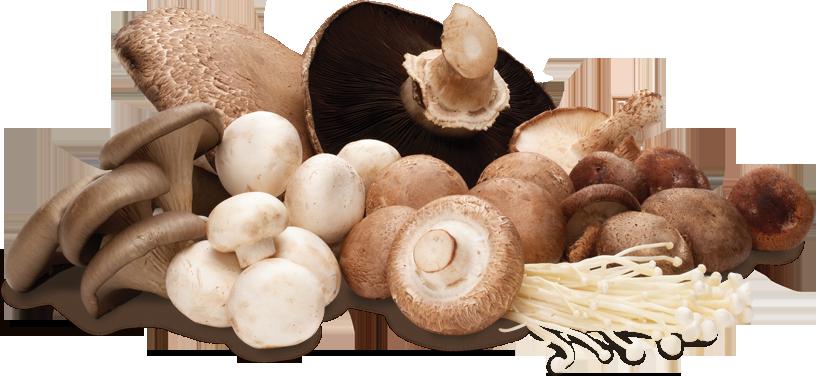 perfect-mushrooms, mandala-park