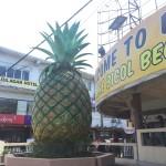 daet, pineapple