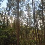 anawangin, zambales, angono-trees