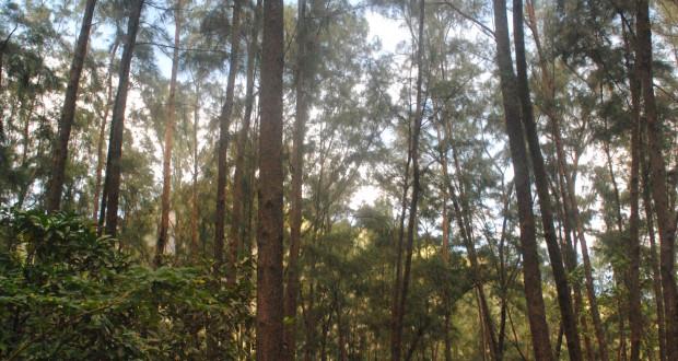 angono trees 2