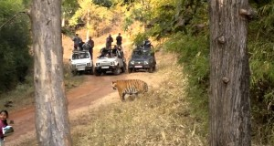 Five Reasons for Trying Wildlife Photography while Enjoying a Vacation at Tadoba Tiger Resort