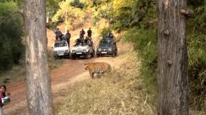 tiger resort