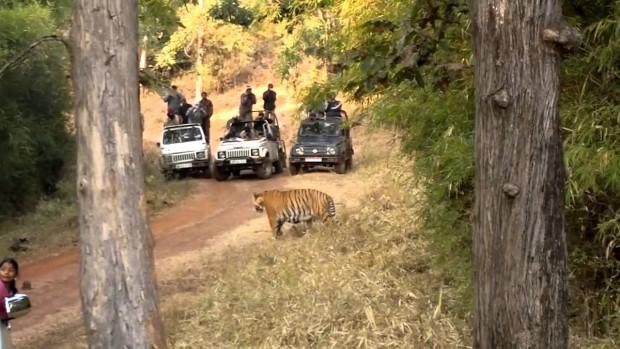 tadoba-tiger-resort, tiger-resort, wildlife-photography