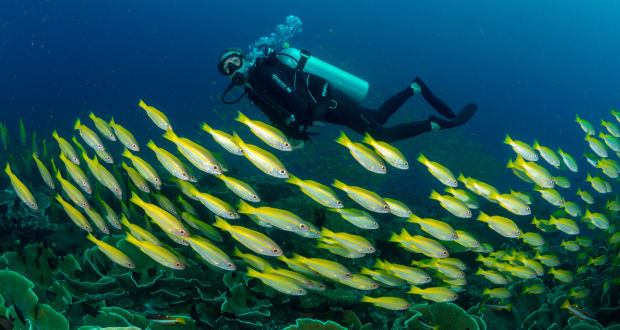 Alexandra Cousteau inspires students during Philippine visit