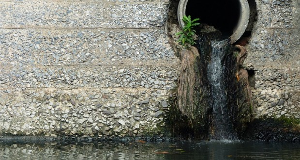 Tips to Deal with Tree Roots in Drain