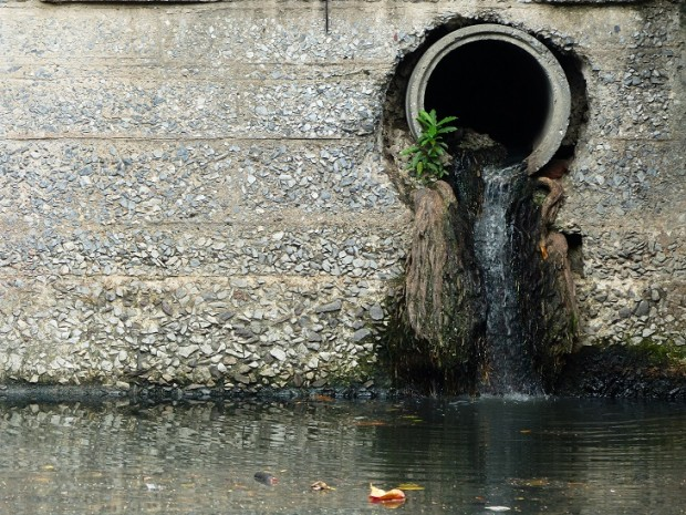 tree-roots-in-drain