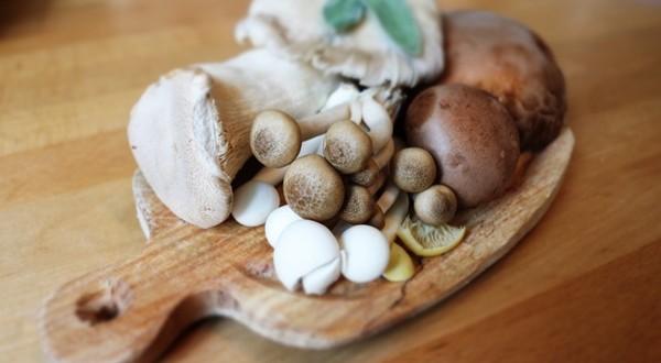 Mushroom-Business