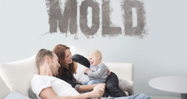 How to deal with mold in the home negosentro - How to deal with mold ...