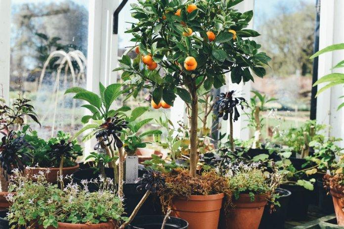 Gardening garden money