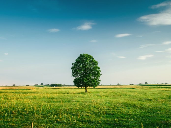 Carbon Footprint of Your Business