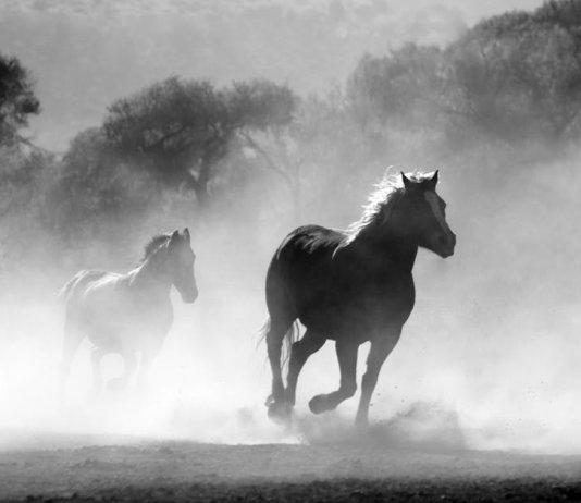 race-horses
