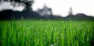 Self-Watering-Planters