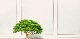 Basic Bonsai Tools