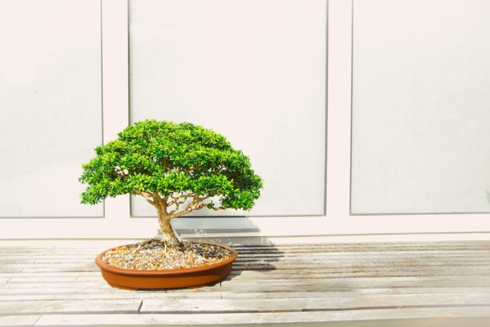 Basic Bonsai Tools
