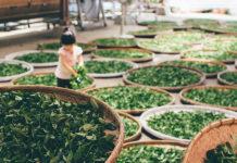 Herbs - Negosentro