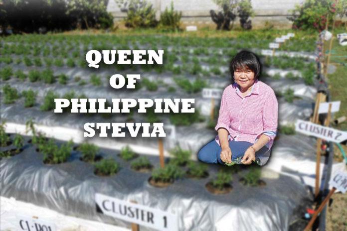 Queen of Philippine Stevia - Negosentro