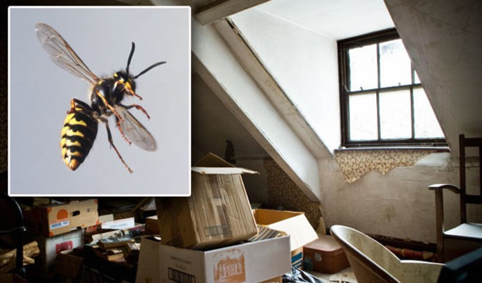 Everything You Must Know About Wasps And Wasp Control 2020 - Negosentro