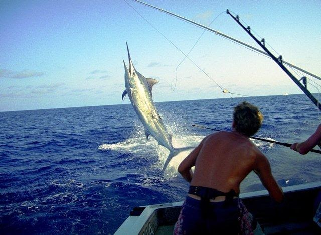 How to make fishing more Fun in Australia