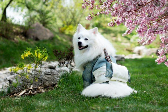 Essential Dog Grooming