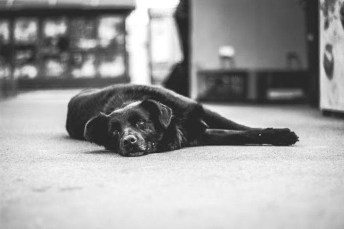 'Crippled' Pets To Walk Again
