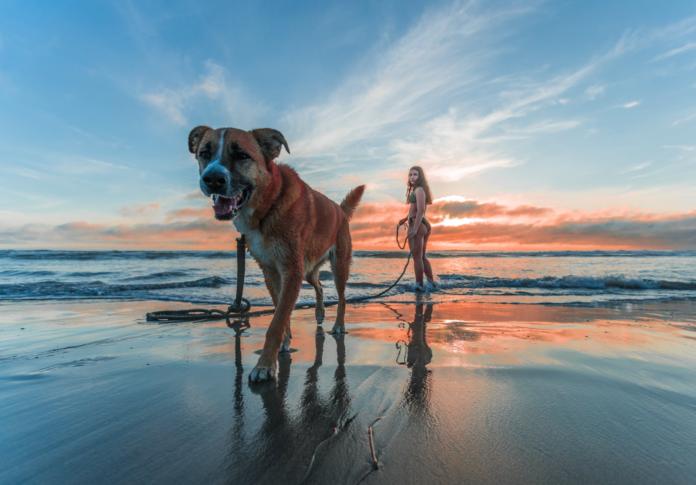 Bringing Your Dog For Traveling